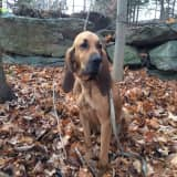 Search Suspended For Missing Police Dog In Danbury, Will Resume In Morning