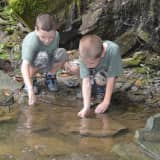 Lewisboro Land Trust Presents Vernal Pool Exploration For Families