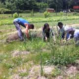WESPAC To Celebrate Earth Day With Greenburgh Garden Event