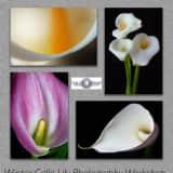 Beat The Winter Blues In Garnerville Flower Photography Workshop