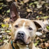 Dog In Long Island Shelter, Smart, Enjoys Nature, Needs Home