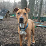 Baby Boy Is The SPCA Of Westchester's Pet Of The Week