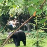 New Bear Sightings Reported In Area
