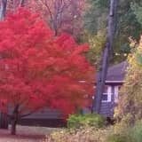 Catch Autumn Colors In Bethel Before Fall Fades