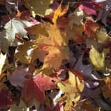 Leave 'Em Alone, Westchester -- Fallen Leaves Are A Landscape Ally