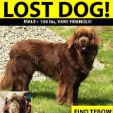 150-Pound Missing Thornwood Dog Found