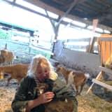 Stratford Native Lisa Miskella Gives Farm Animals A Home At Sanctuary