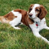 Have You Seen Maxx In The Brewster Area?