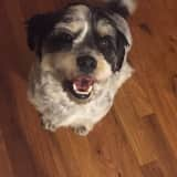 Missing Dog Reported In Elmsford