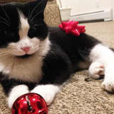Have You Seen This Tuxedo Kitty Wandering Paramus?