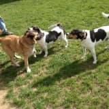 Bedford To Hold Free Dog Park Discussion