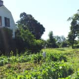 Learn Pros Of Leasing Farmland At Westchester Land Trust Events