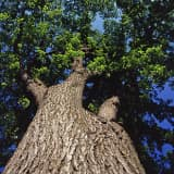 Bedford Celebrates Arbor Day