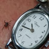 Man Dies Of Tick-Borne Disease Near Northern Westchester