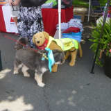 New Canaan Celebrates Annual Dog Days