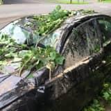 Ridgefield Clears Fallen Trees As Crews Restore Power After Huge Storm