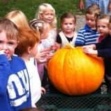 Ridgefield Prepares For Annual Great Pumpkin Weigh-Off