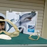 Marine Education Center Seeks Committee Members