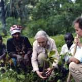 Animal Rights Champion Jane Goodall To Speak At Danbury's WCSU
