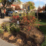Time Hotel And Wickes Arborists Help Landscape Nyack