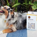 Find Out Your Dog's Breed and Potential Health Risks with This $60 DNA Test