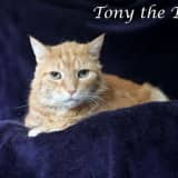 Rockland's Hi Tor Seeks Home For Tony The Tiger