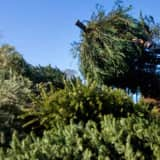 DPW To Start Curbside Christmas Tree Pickup In Prospect Park