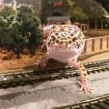 Train Show Ends, Greenburgh Nature Center Plans For 2016