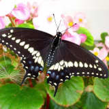 Celebrate Butterfly Day With Walk, Activities In Lyndhurst