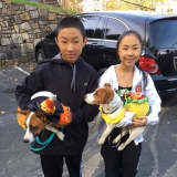 Ossining Holding Annual 'Howloween' Pet Parade