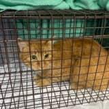 Cat Found Shot On Long Island