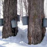Ward Pound Ridge Reservation Teaches American Indian Sugaring