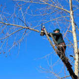 Trees In Leonia To Be Pruned Along Electrical Power Lines