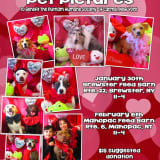 Putnam Humane Society Offers Valentine's Pictures With Pets