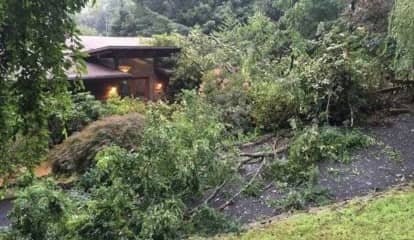 Tree Falls Through Roof Of Wesley Hills Home