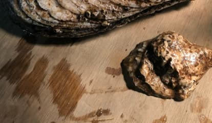 Aw, Shucks: Oyster Found In Hudson River Described As 'Largest Ever'