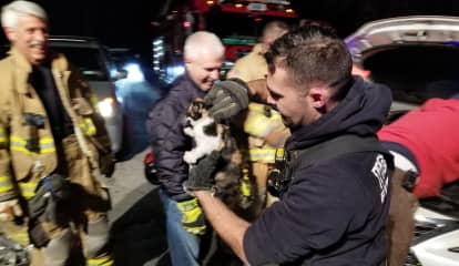 Kitten Rescued From Inside Engine Of Moving Vehicle In Northern Westchester