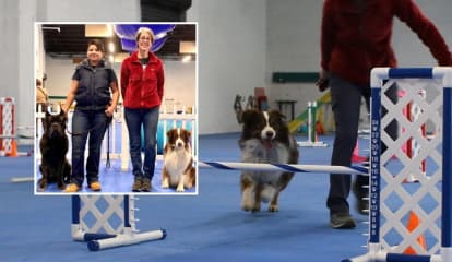 Bergen County Pros Unleash North Jersey Dog Training Mecca