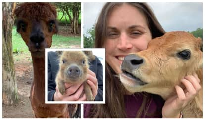 Sussex County Petting Zoo Owner Indicted On Animal Cruelty Charges