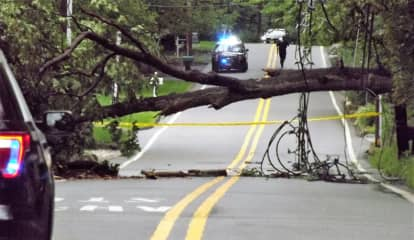 Fallen Tree Blocks Busy Washington Township Road