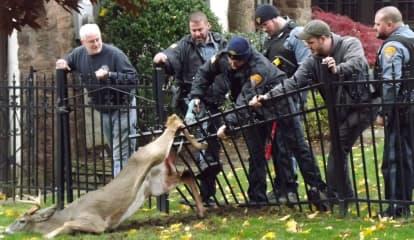 Ridgewood Responders Free Impaled Deer