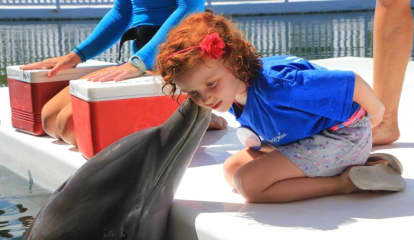 Dolphin Dream Comes True For Ailing Paramus Girl, 6