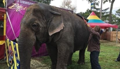 Death Of Beloved 'Beulah The Elephant' Known At NJ Fairs Sparks Outrage
