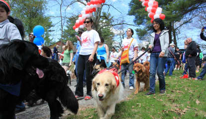Dogs, Humans Excited For Annual SPCA Dog Walk In Yorktown