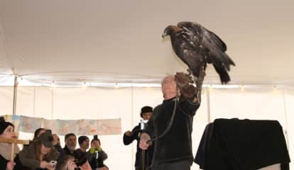 Teatown Gears Up For Annual Eaglefest