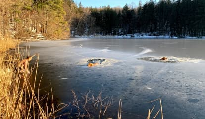 Man Rescues Two Dogs From Frigid Reservoir In Westchester