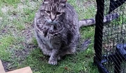 $1K Reward For Info Leading To Conviction Of Person Who Decapitated Long Island Family's Cat