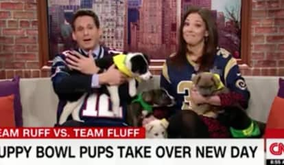 Video: Animal Planet Puppy Bowl Contestants From Danbury Animal Welfare Society Featured On CNN