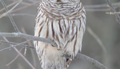 Owl Crashes Through Window Of Kitchen In Northern Westchester