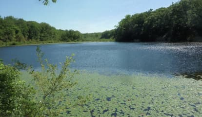 Teens Rescued After Saving Dog At Northern Westchester Lake